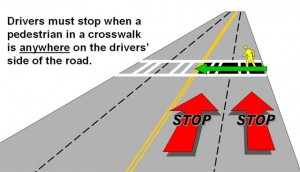 stop-for-pedestrians-image-1-300x172