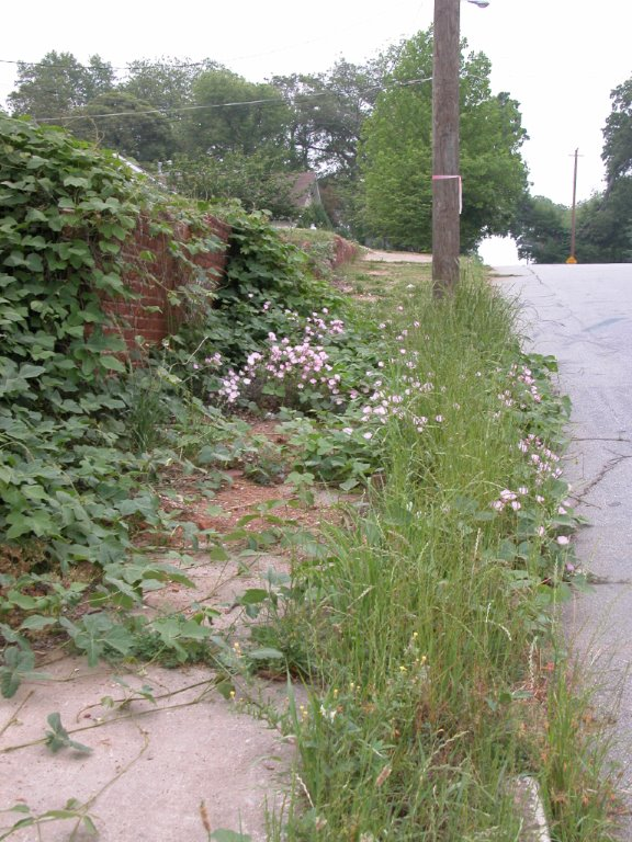Vines overgrowth sidewalk