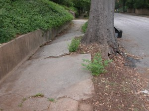 Uplifted sidewalk caused by bulging roots on oversized street tree